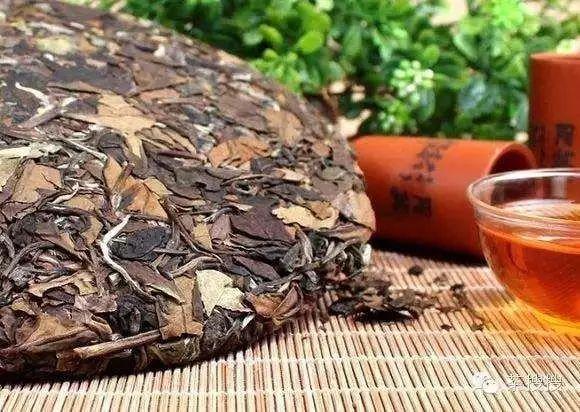 陈皮搭配白茶,可适用不同人群的养生